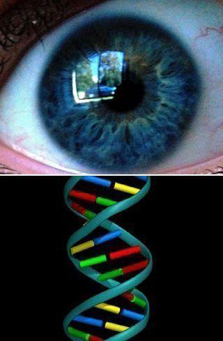 Благодаря этой технологии возможно узнать цвет глаз человека, цвет его кожи, волос, форму головы, а также место на