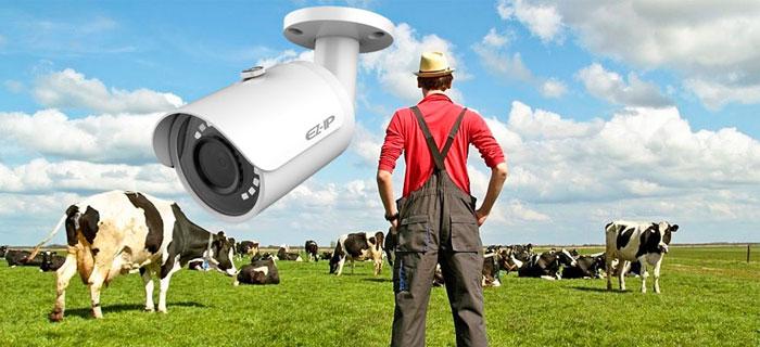 Видеонаблюдение в фермерском и личном подсобном хозяйстве